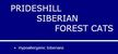 Prideshill Hypoallergenic Siberian Forest Cats